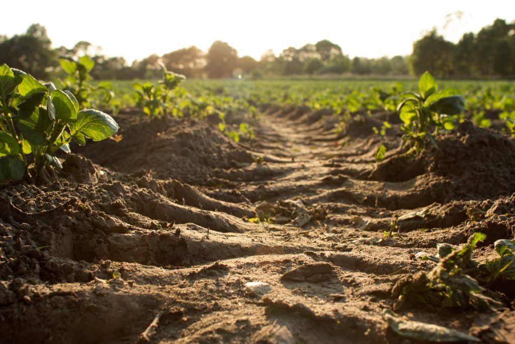"The ""SOIL YOUR UNDIES"" test: How is soil influencing our health?"